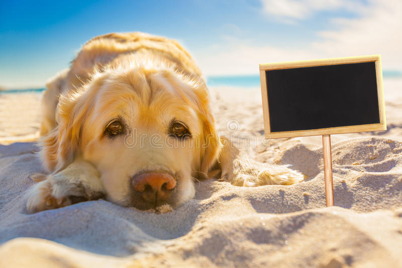 Pies przechodzić na emeryturę przy plażą obraz royalty free