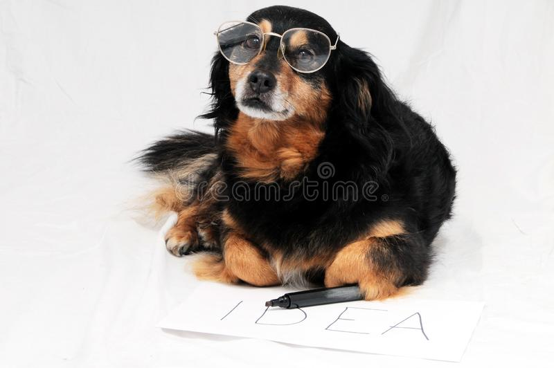 pies przed białym tłem, cyfrowy fotografia obrazek jako tło obrazy royalty free