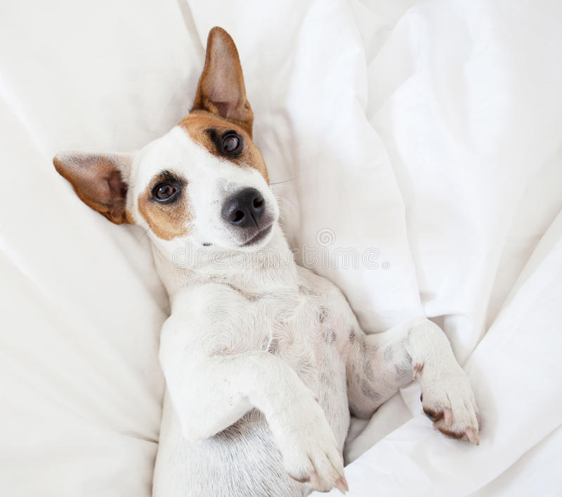 Pies przy łóżkiem fotografia royalty free