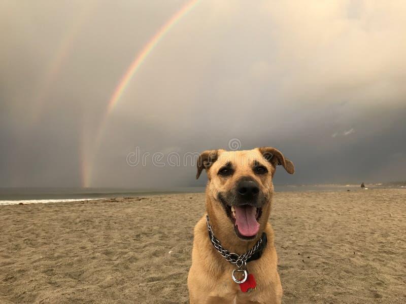 Pies przy końcówką tęcza fotografia stock