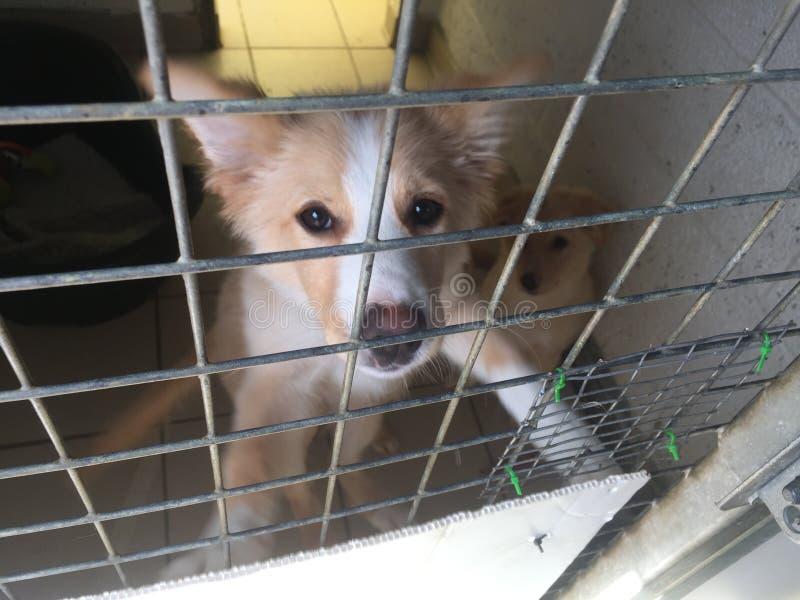 Pies przy ratowniczym schronieniem w klatce obrazy royalty free