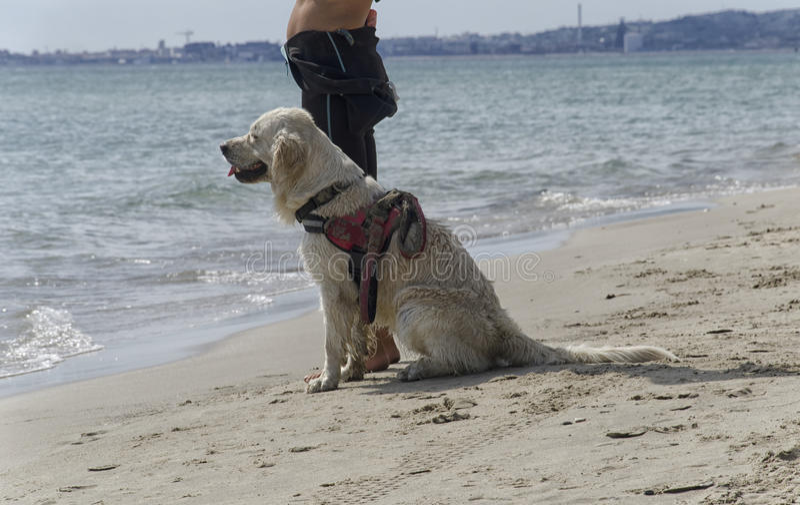 Pies przygotowywający wchodzić do woda obrazy royalty free