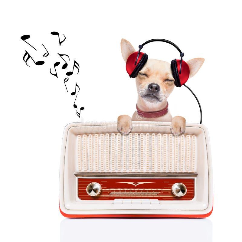 Pies relaksuje muzykę fotografia stock
