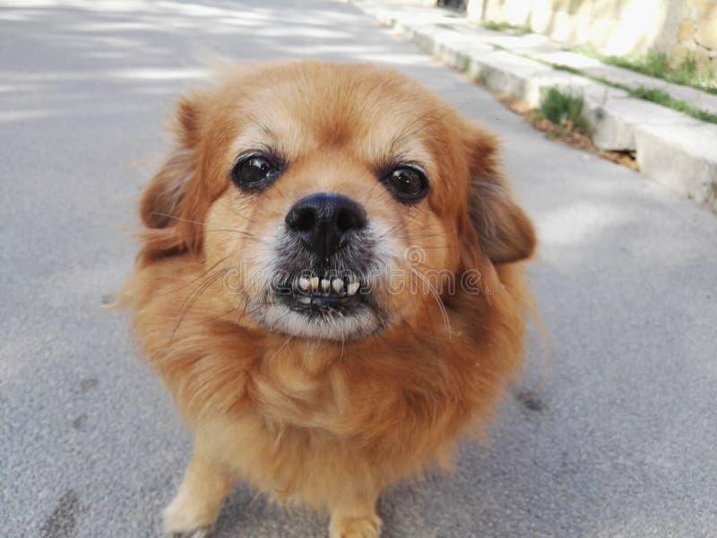 pies się uśmiecha fotografia stock
