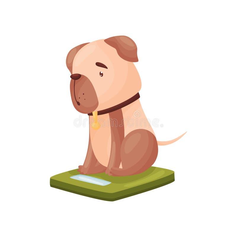 Pies siedzi na skalach t?a ilustracyjny rekinu wektoru biel ilustracji