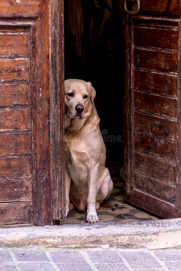 Pies siedzi na zewnątrz drzwi obrazy stock