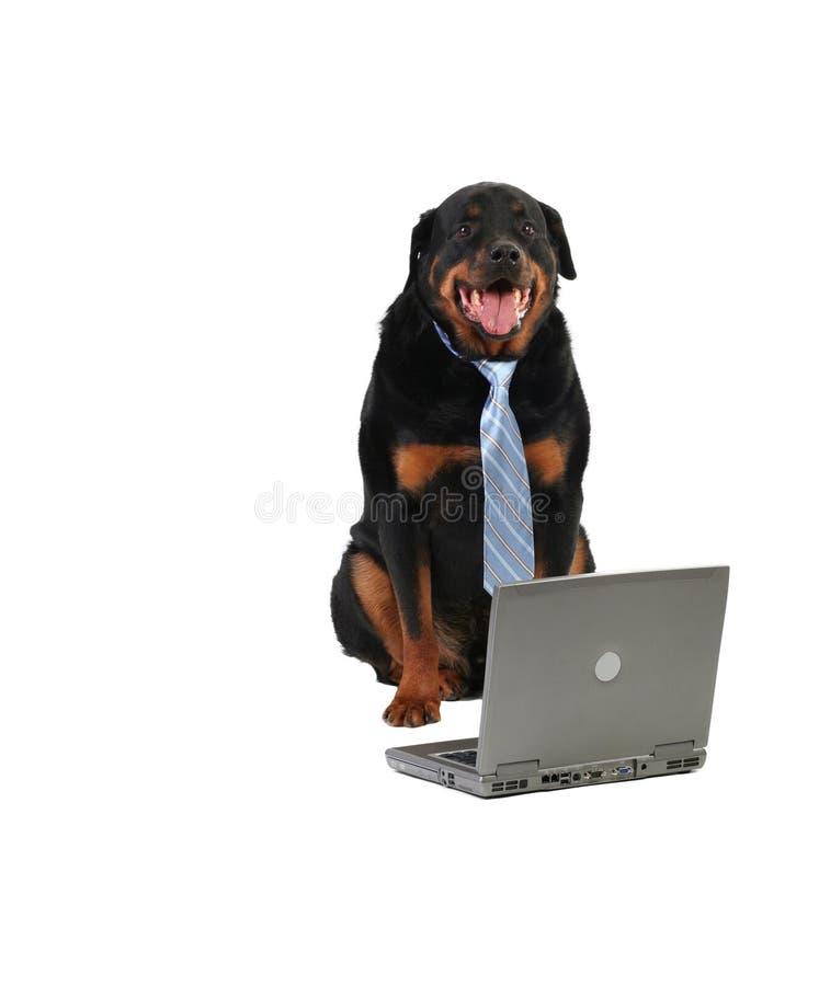 pies straży szczęśliwy fotografia royalty free