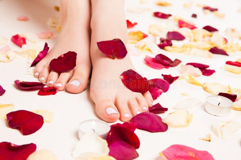 Pies suaves femeninos en pétalos color de rosa imagen de archivo libre de regalías