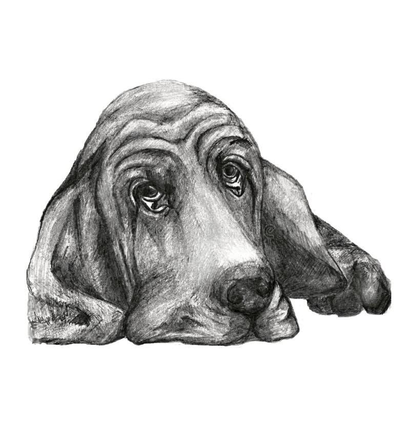 Pies trakenu baset royalty ilustracja