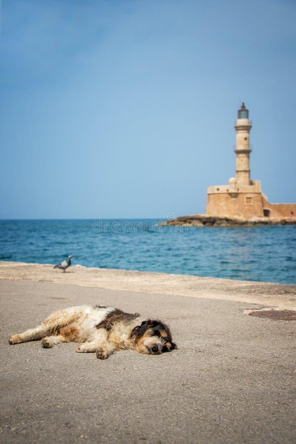 Pies uśpiony w słońcu w schronieniu Chania latarnia morska w tle, Crete Grecja obrazy royalty free