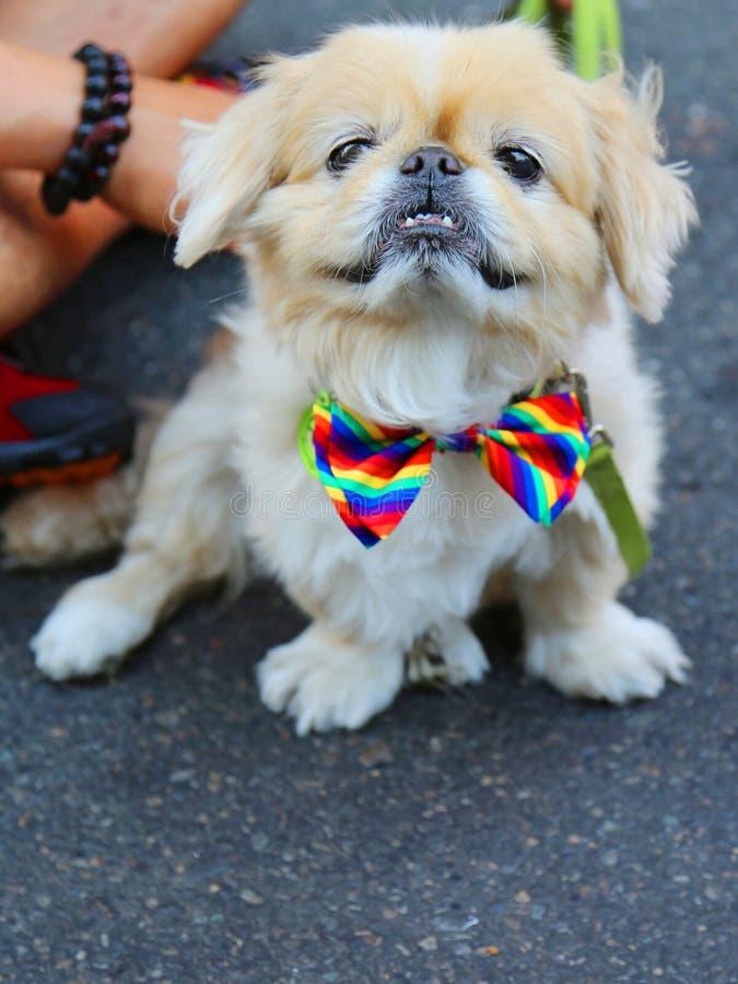 Pies uczestniczy przy LGBT dumy paradą w Miasto Nowy Jork zdjęcie stock