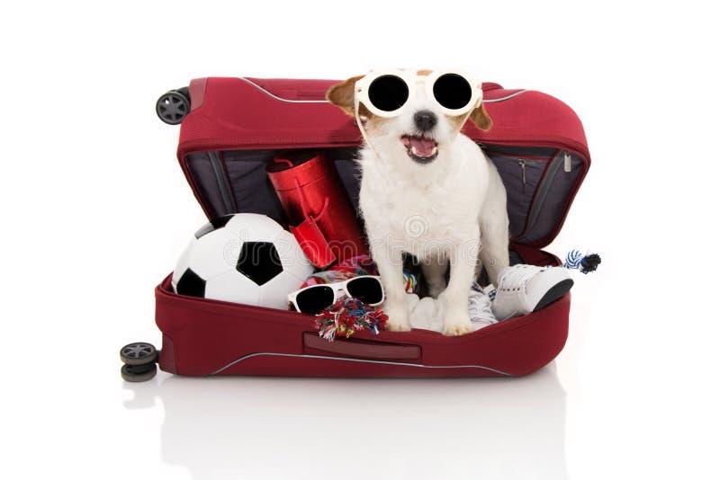 PIES WŚRODKU bagażu IŚĆ NA wakacjach JEST UBRANYM okulary przeciwsłonecznych CZERWONEGO NOWOŻYTNEGO bagażu LUB Odizolowywaj?cy pr zdjęcie stock
