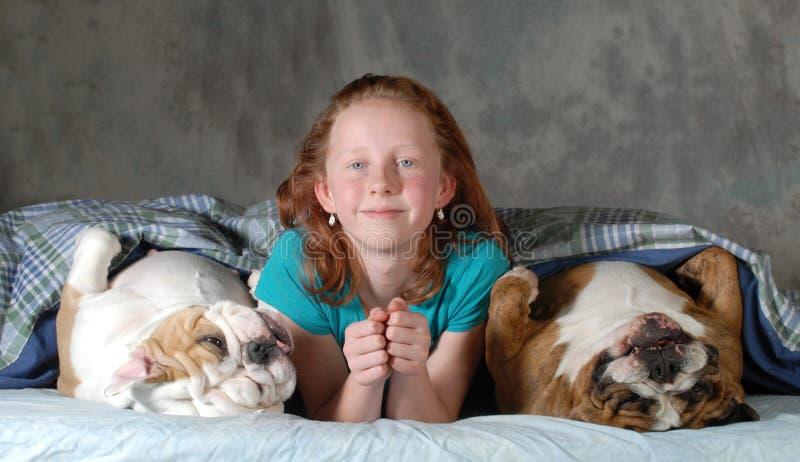 Pies w łóżku fotografia royalty free