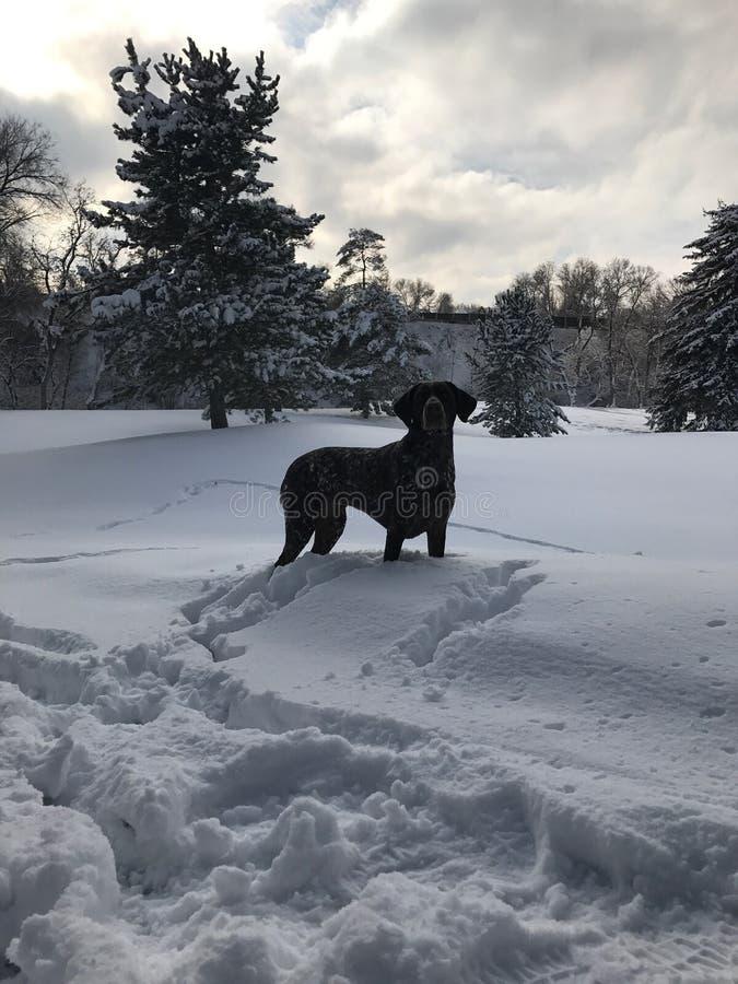 Pies w śniegu obraz royalty free