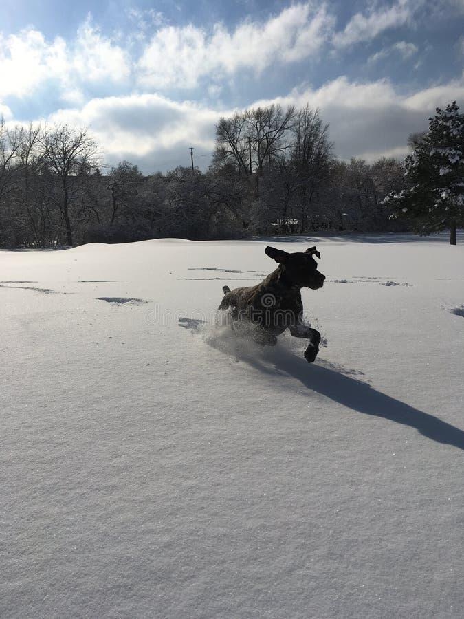 Pies w śniegu zdjęcie stock