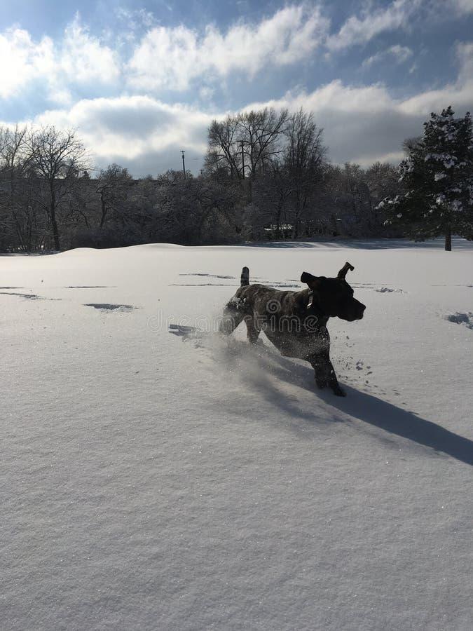 Pies w śniegu fotografia royalty free