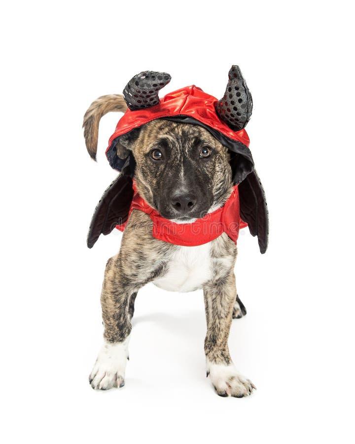 Pies w diabła Halloween kostiumu zdjęcie stock