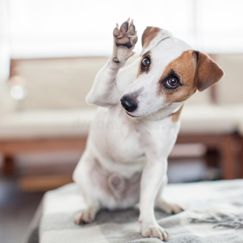 Download Pies w domu zdjęcie stock. Obraz złożonej z powitanie - 106912538