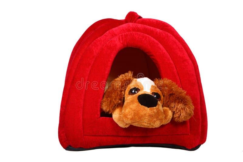 Pies W Domu Bezpłatne Zdjęcia Stock