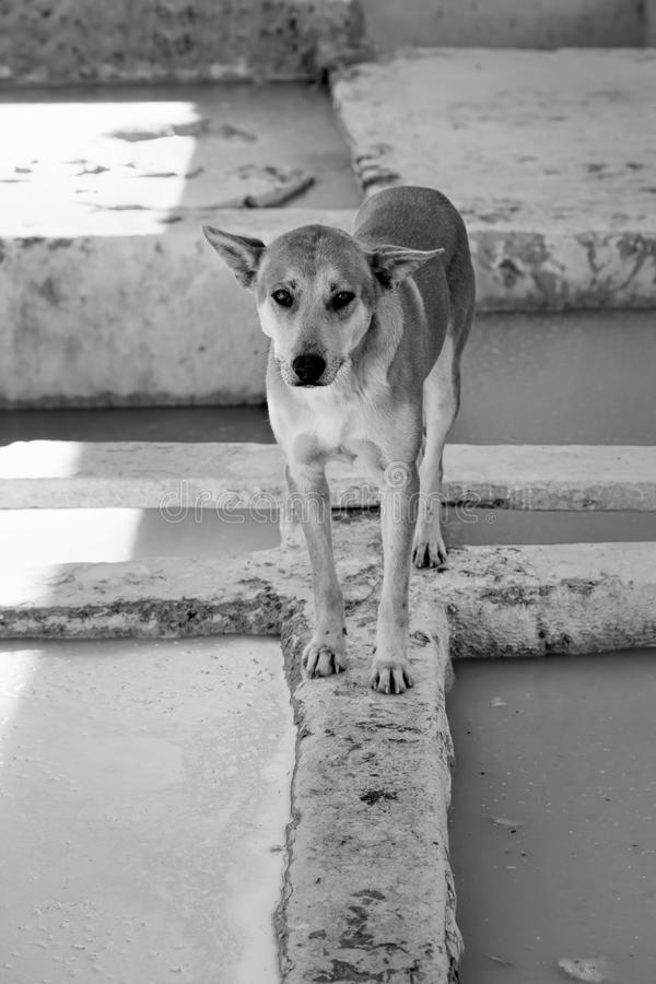 Pies w garbarni Medina Maroko fotografia stock