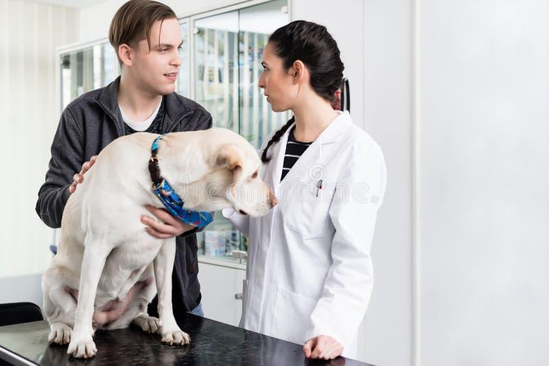 Pies w klinice dla badania kontrolne zdjęcia royalty free