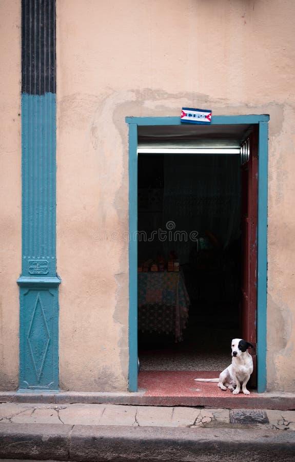 Pies w Kubańskim domu zdjęcia royalty free