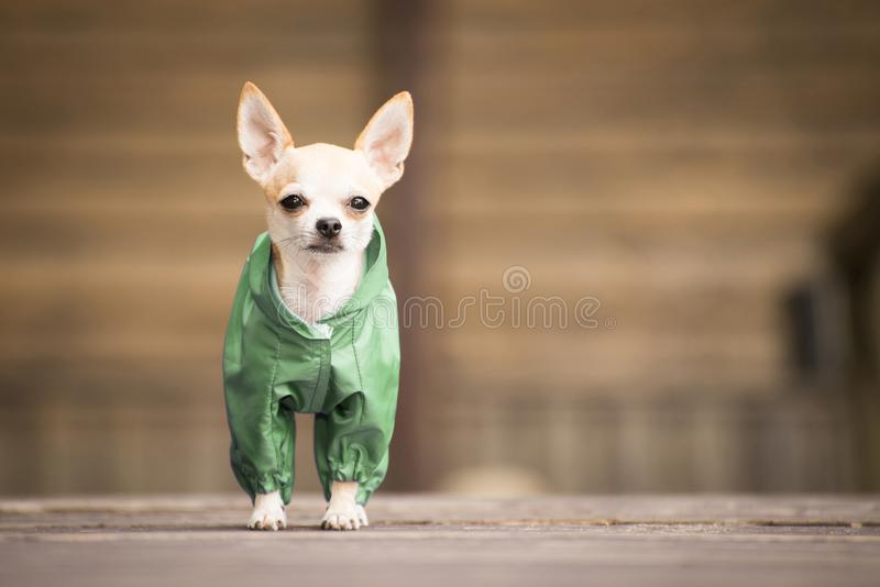 pies w odziewa obrazy stock