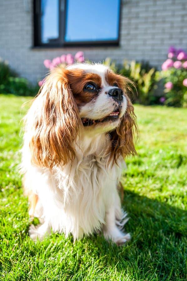 Pies w ogródzie fotografia royalty free