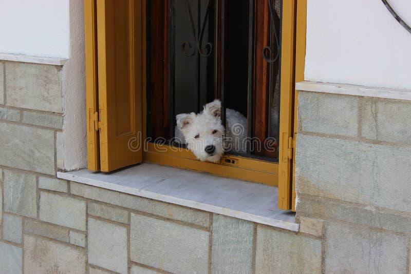 Pies w okno fotografia stock