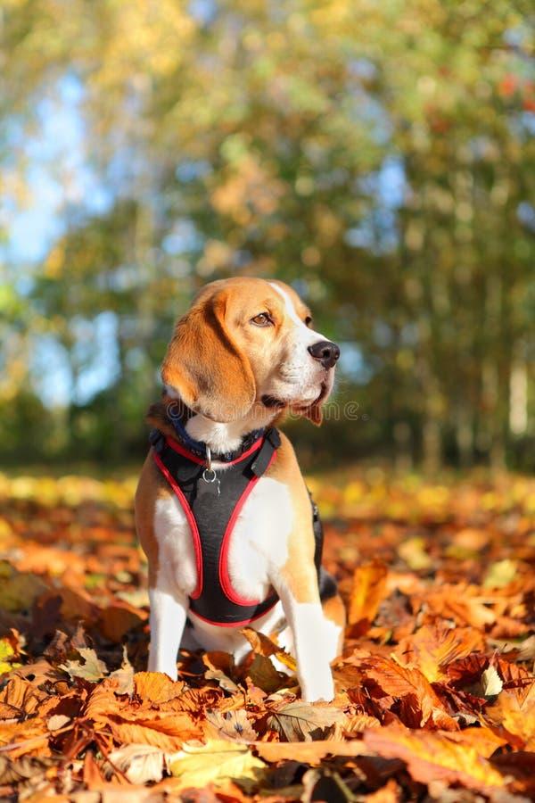 Pies w parku fotografia royalty free