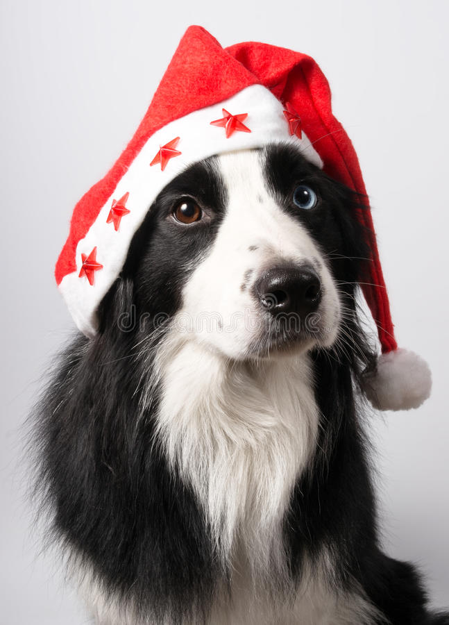 Pies w Santa nakrętce zdjęcie royalty free