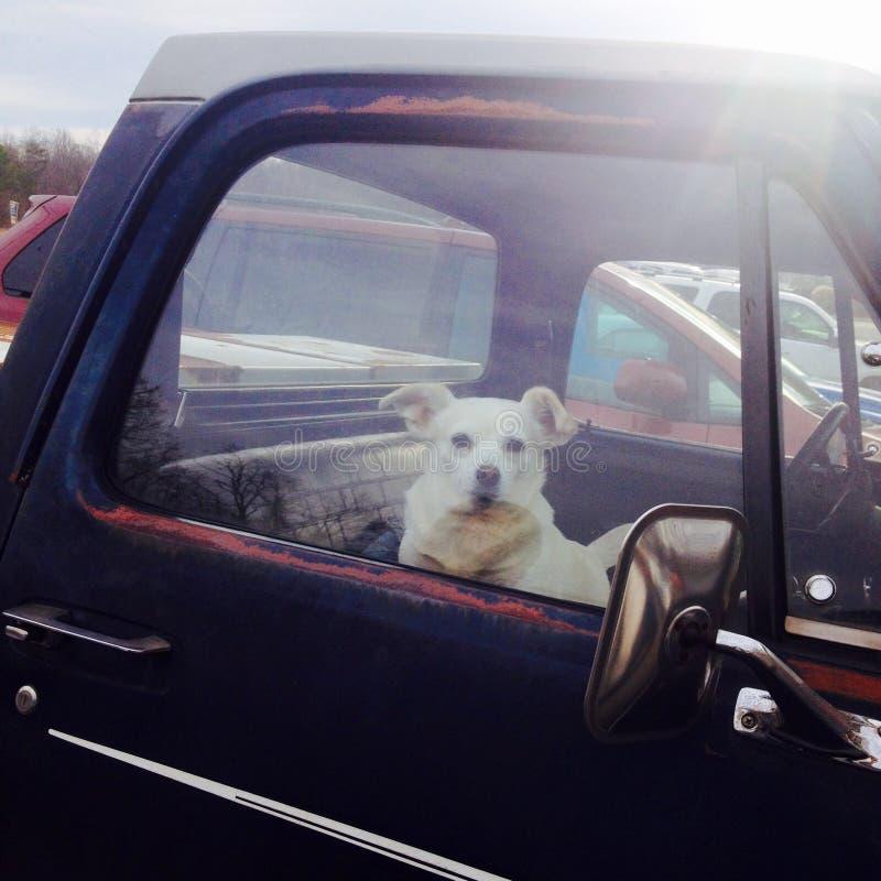 Pies w starej furgonetce zdjęcia stock