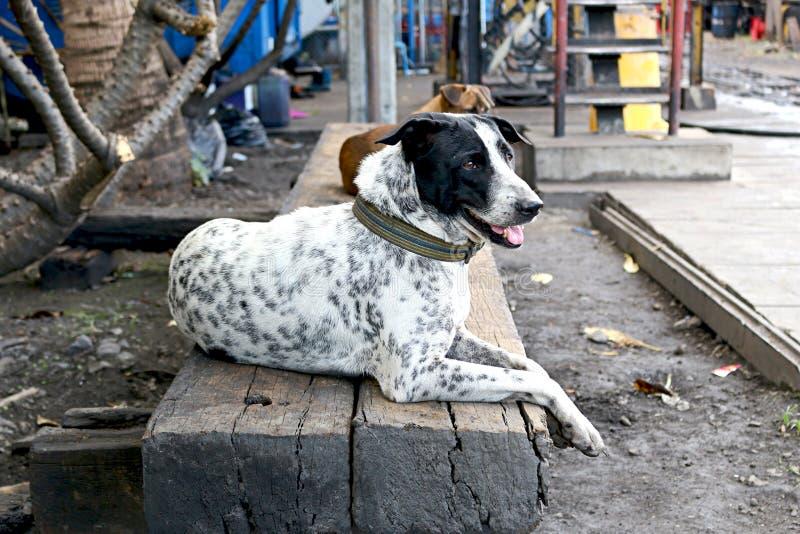 Pies w taborowej zajezdni obraz royalty free