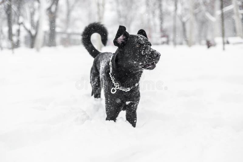 Pies w zima śniegu obraz royalty free
