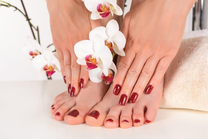 Pies y manos femeninos con la manicura y la pedicura polacas rojo oscuro del color imagen de archivo libre de regalías