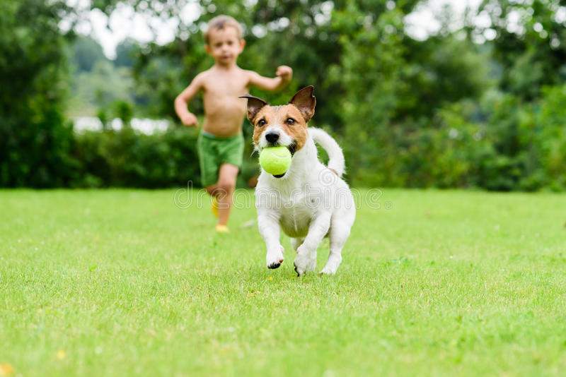 Pies z balowym bieg od dziecka bawić się keczup grę obraz stock