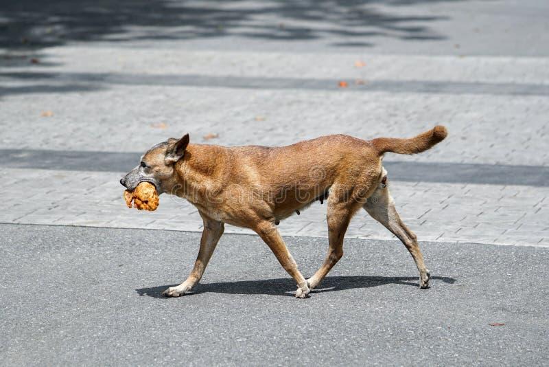 Pies z dużym kawałkiem kurczaka mięso w swój usta obraz stock