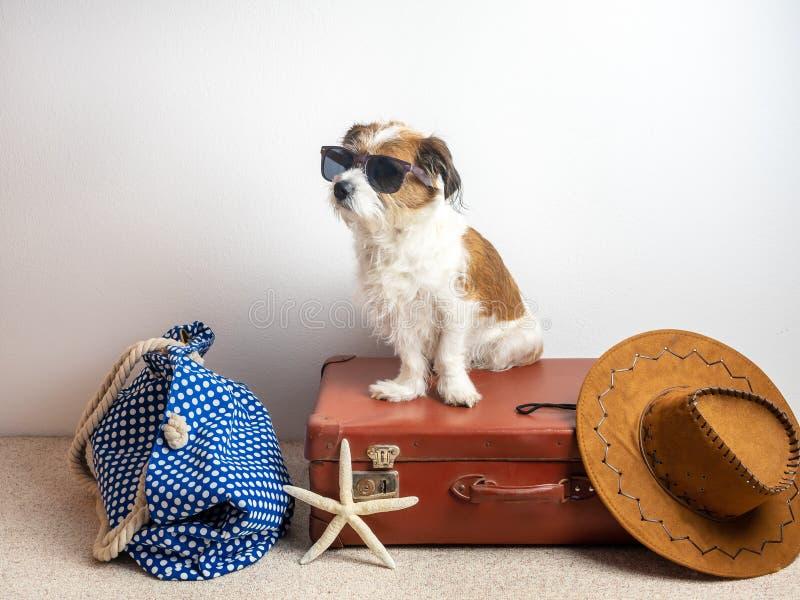 Pies z okularami przeciwsłonecznymi na podróży skrzynce obraz stock