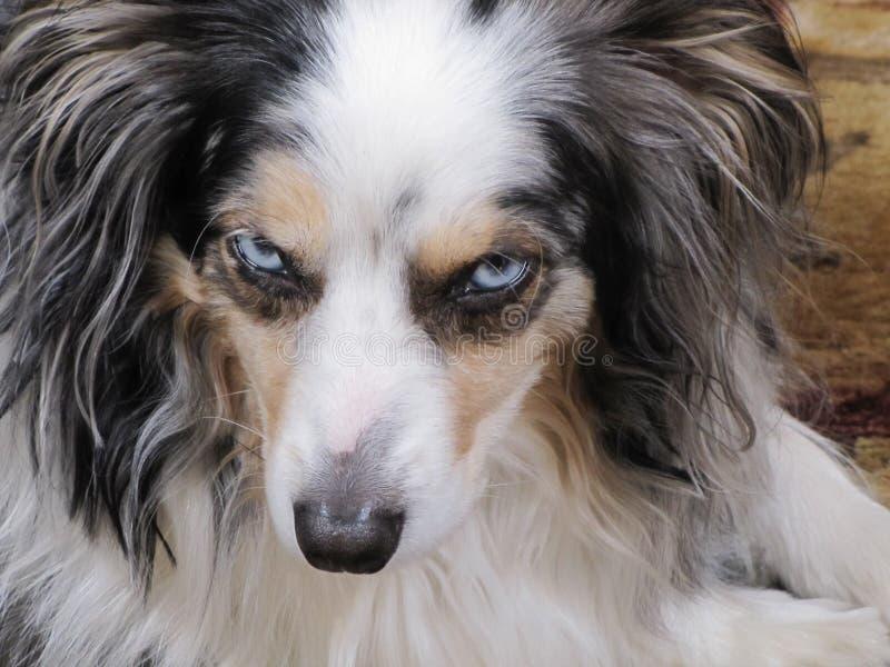 Pies z postawą zdjęcie royalty free