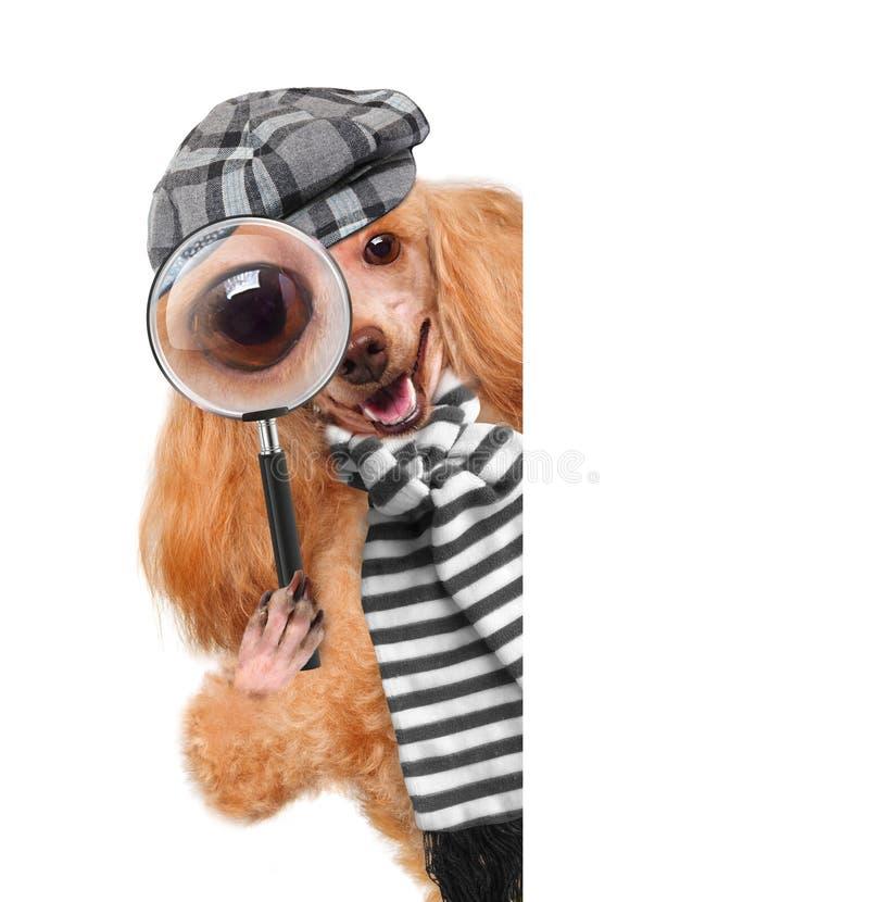 Pies z powiększać i szukać - szkło zdjęcia royalty free