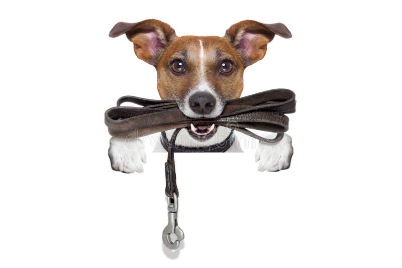 Pies z rzemiennym smyczem obrazy stock