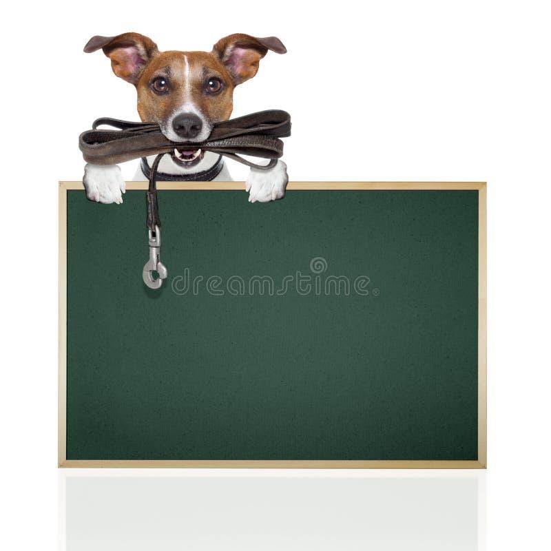 Pies z rzemiennym smyczem zdjęcie royalty free