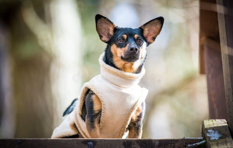 Pies z ubraniami śmiesznymi obraz royalty free