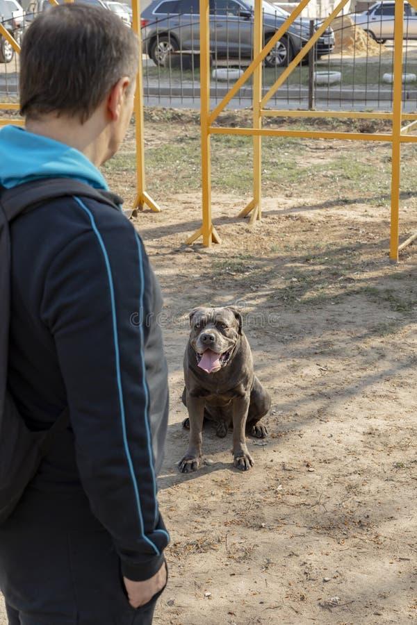 Pies z w?a?cicielem na sta?owym miejscu w jasnej wiosny pogodzie zdjęcie stock