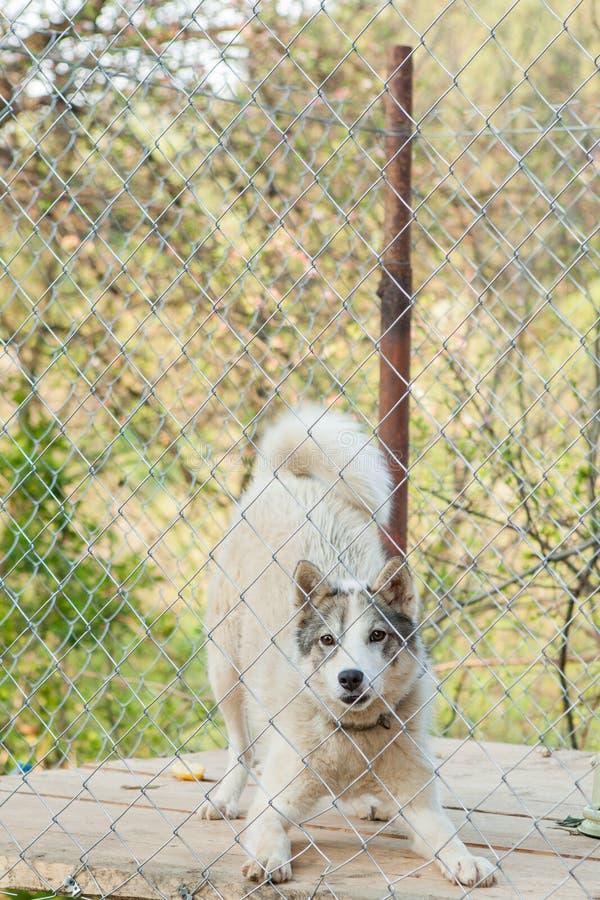 Pies za ogrodzeniem w budka zdjęcia stock