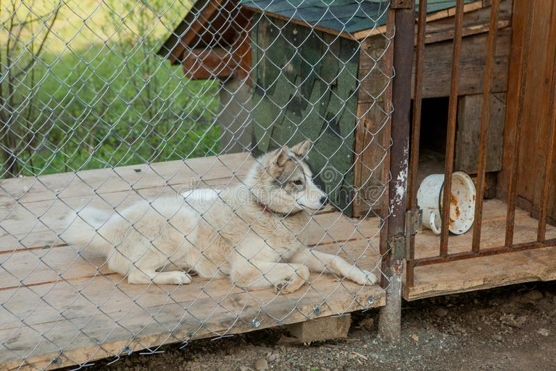 Pies za ogrodzeniem w budka obraz royalty free