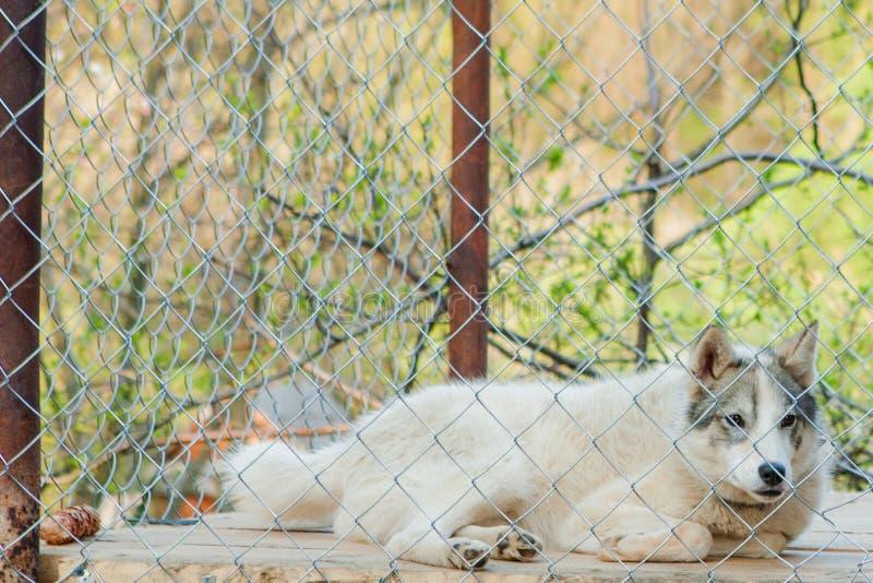 Pies za ogrodzeniem w budka fotografia royalty free