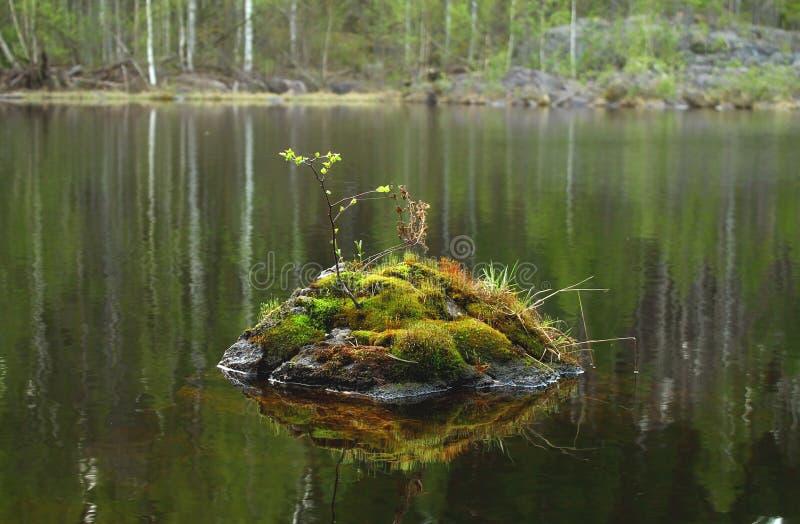 Pietra con muschio e le foglie dentro il fiume fotografia stock libera da diritti
