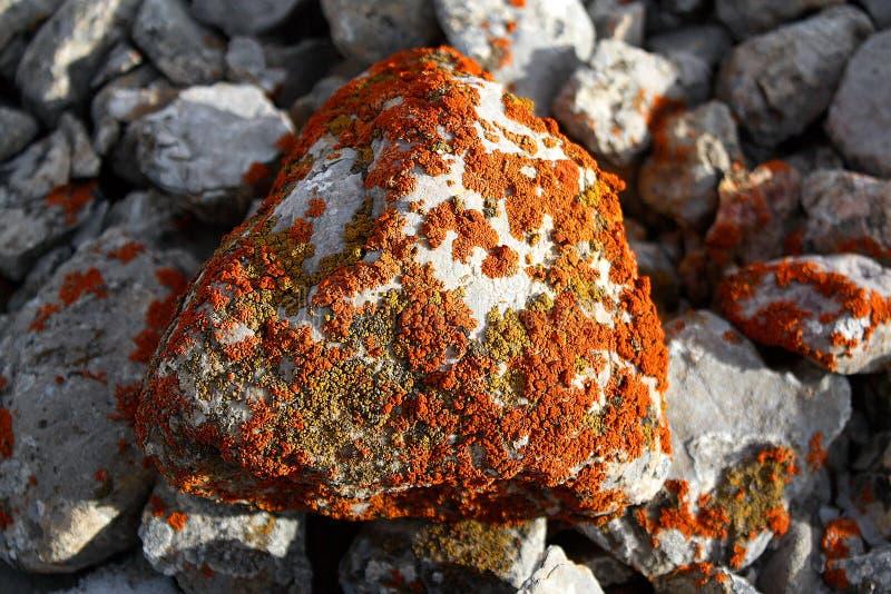 Pietra del muschio alle montagne selvagge del Kirghizistan immagine stock
