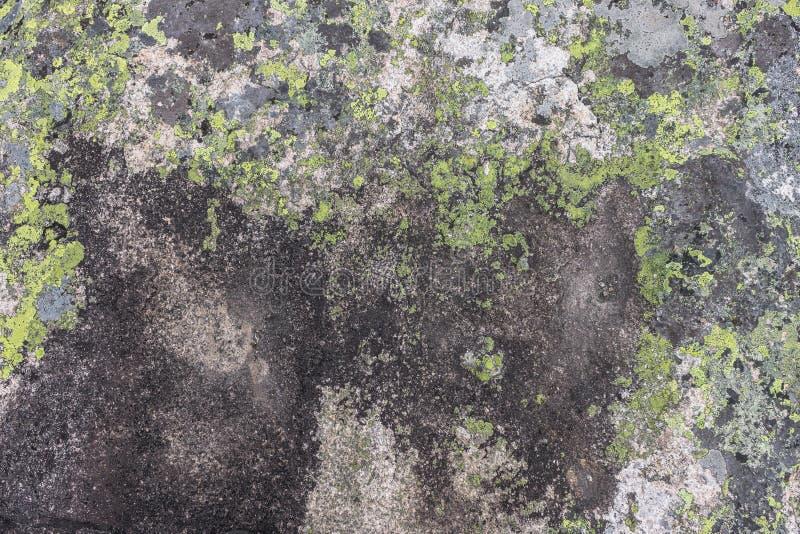 Pietra della montagna dei fiori grigi e verdi e gialli fotografia stock libera da diritti